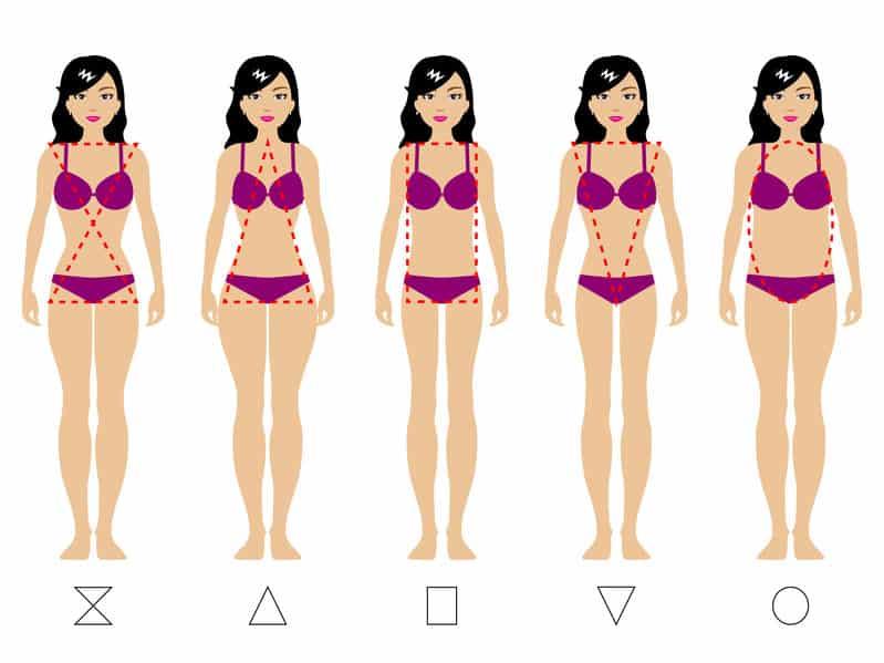 Quels sont les différents types de morphologie